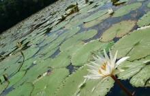 Lake Izabel