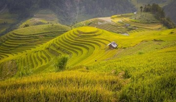 A picture of 3 Day Adventure to Mu Cang Chai Rice Fields