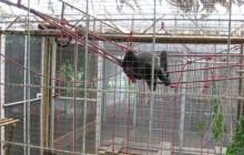 Animal Rescue Centre