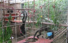 Animal Rescue Centre