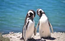 20 Day Complete Patagonia & Iguazu Trip