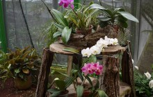 Botanical Orchid Garden