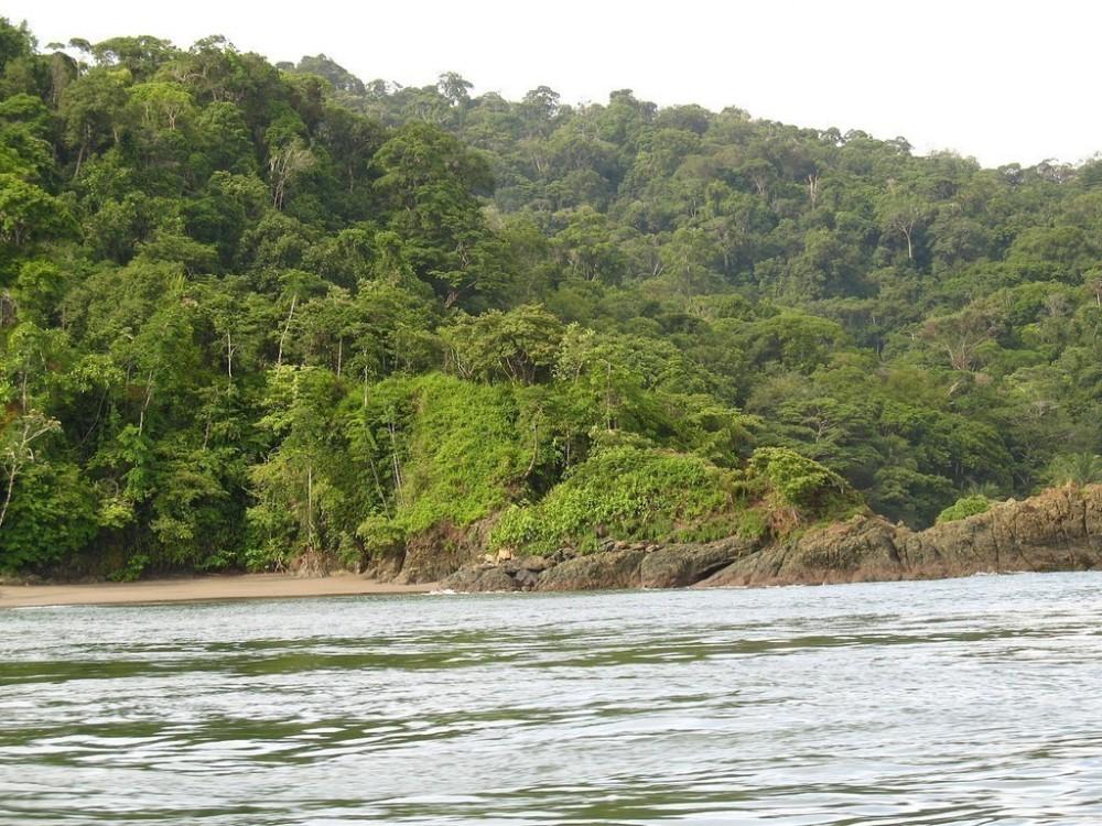 Sierpe River