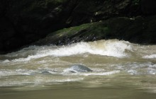 Pacuare River