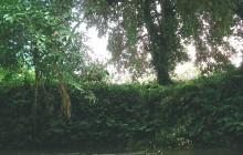 Penas Blancas River