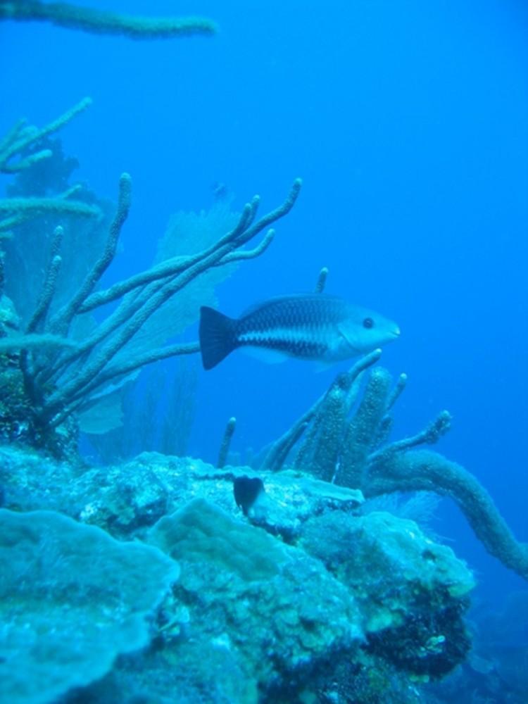 Snorkeling: Mexico Rocks & Tres Cocos
