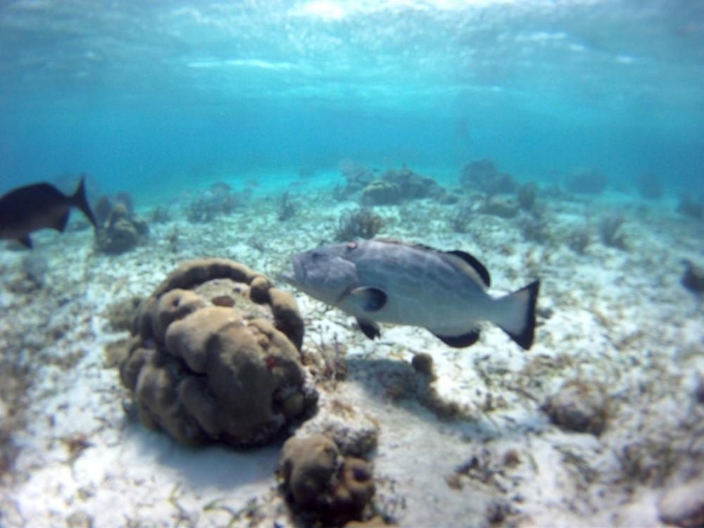Scuba Diving: 1 Tank