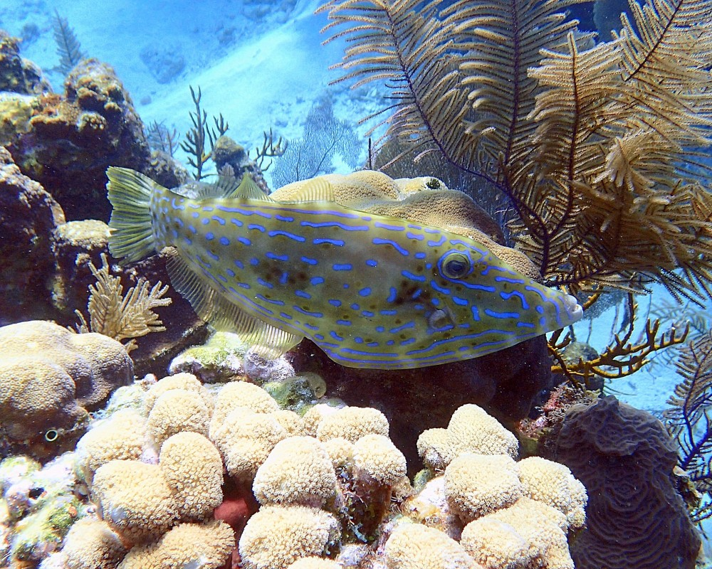 Scuba Diving: Turneffe Atoll