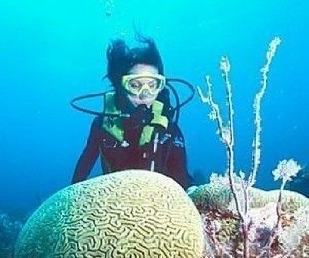 Diving the Southern Barrier Reef