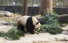 3-Day Terra-cotta Warriors and Giant Panda Tour