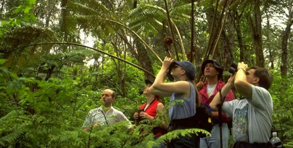 Bird Watching In Corazon Del Bosque, Nearby Panajachal