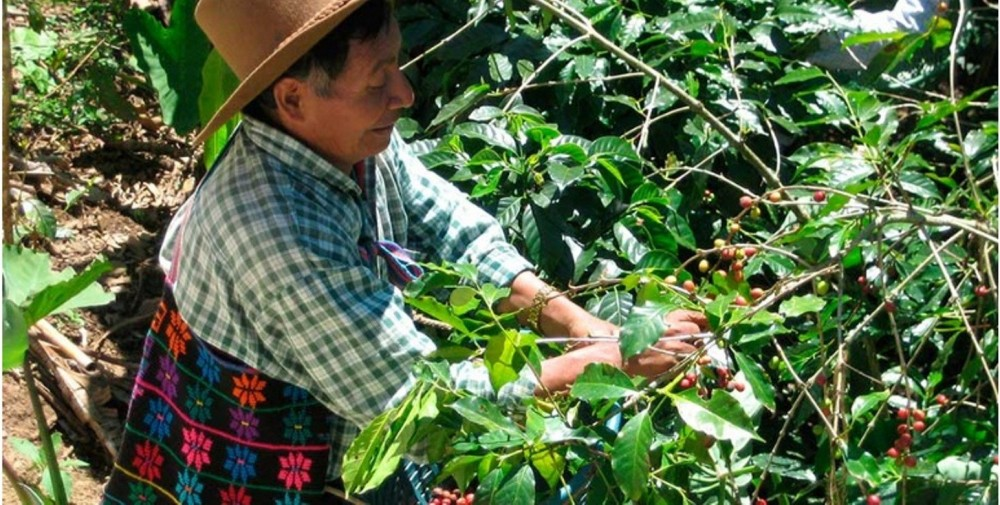 Coffee Farm Atitlan