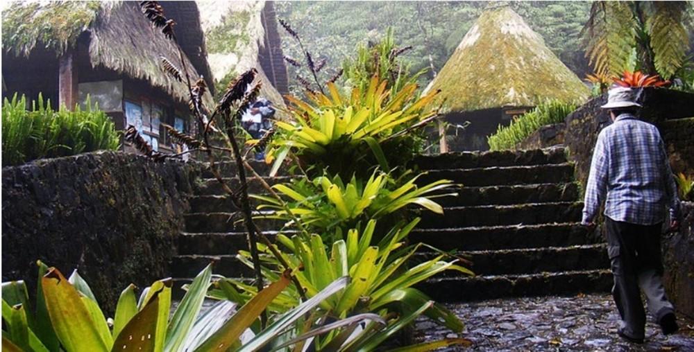Biotope Of El Quetzal