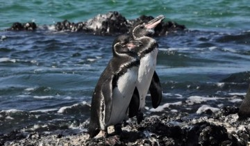 A picture of 6-day Galapagos Island Hopping Budget