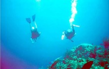 Seahorse Dive Shop