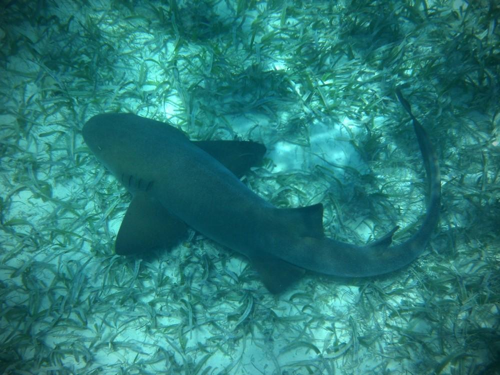 Shark Hole