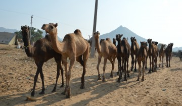 A picture of Unseen Rajasthan Private Tour