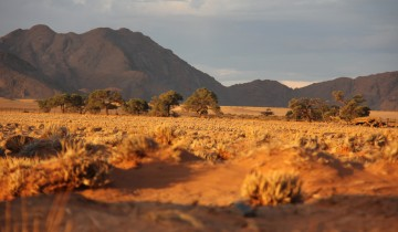 A picture of Private Sossusvlei 1 Night Camping from Walvis Bay