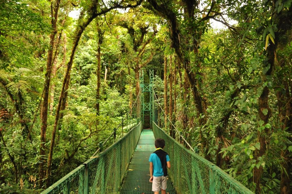 Selvatura Monteverde Hanging Bridges with Guide