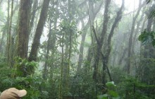Guided Hike in Santa Elena Cloud Forest Reserve