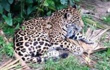 Belize Zoo Adventure