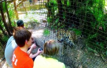 Belize Zoo Adventure