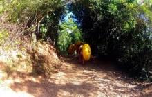 Cave Tubing & Rainforest Trek Adventure