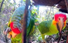 The Belize Zoo, Rainforest Trek & Cave Tubing
