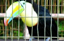 El Nispero Zoo