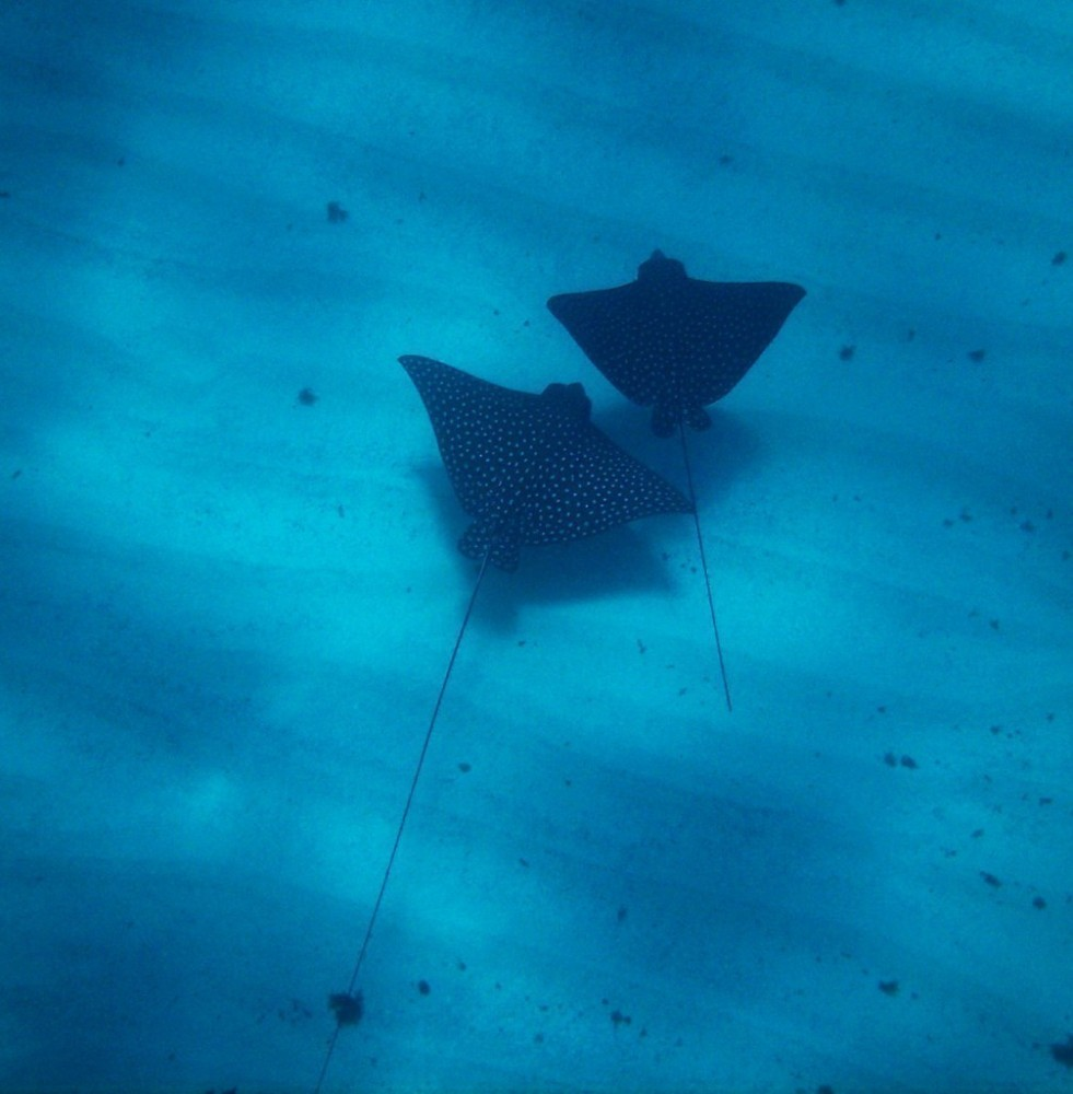 Eagle Ray Canyons