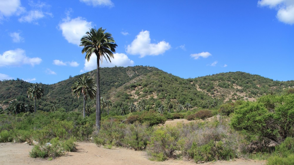 Campana National Park
