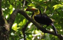 El Pilar Birding