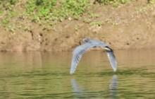 Aguacate Lagoon Birding