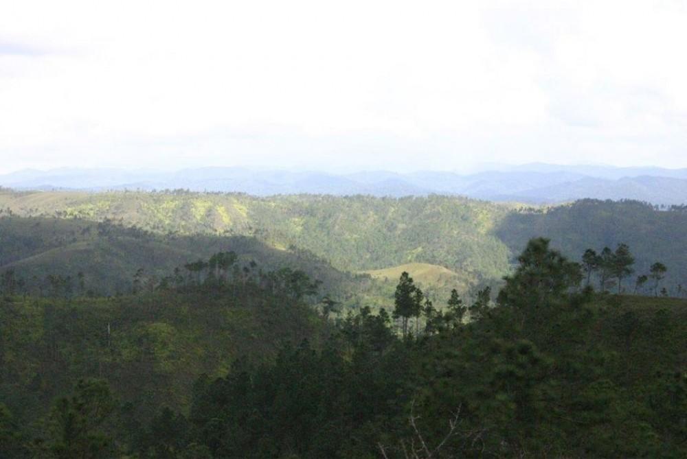 Mountain Pine Ridge - San Ignacio | Project Expedition