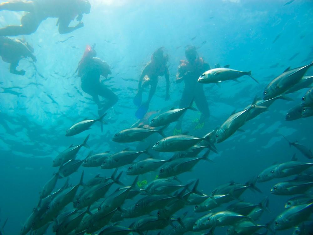 Snorkel Marino Ballena - Half Day
