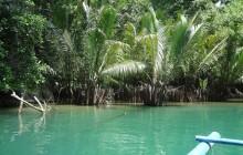 Mangrove Point