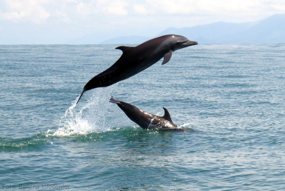 Whale & Dolphin Watching Tour