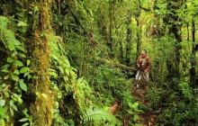 Juan Castro Blanco Cloud Forest (Searching for the Quetzal)