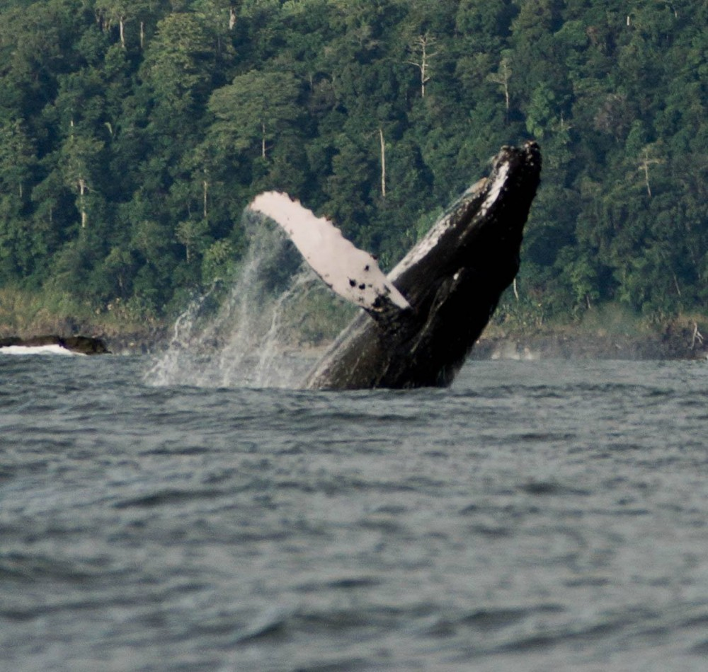 Whale Watching & Dolphin Encounter Combination Tour