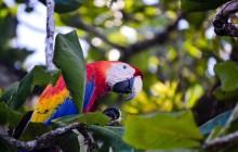 Mangrove Nature Trip