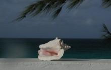 Salt Cay, Turks Islands