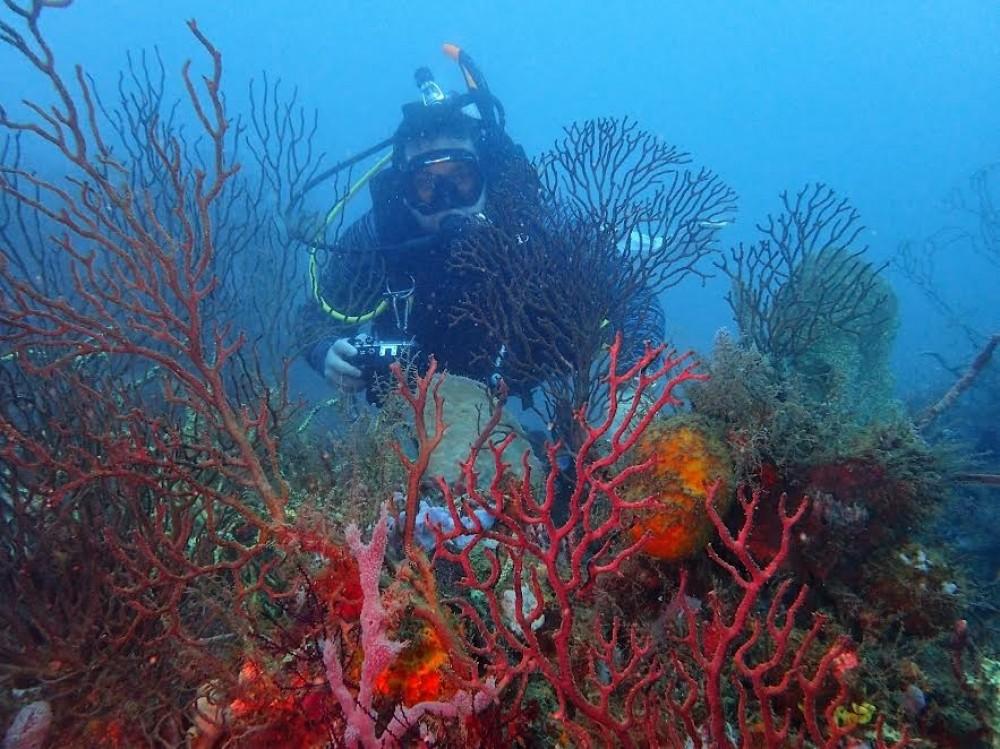 Diving Paseo Portobelo