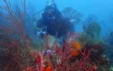 Dive Adventure Panama
