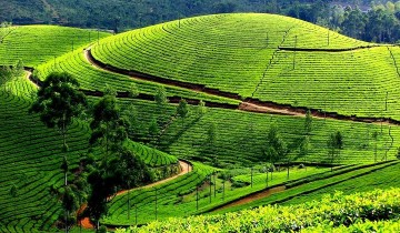 A picture of 5 Day Kerala Experience