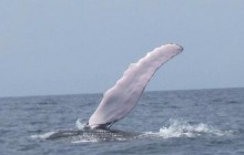 Panama City to Isla Taboga: Whale Watching