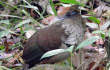Pipeline Road - Birding Tour