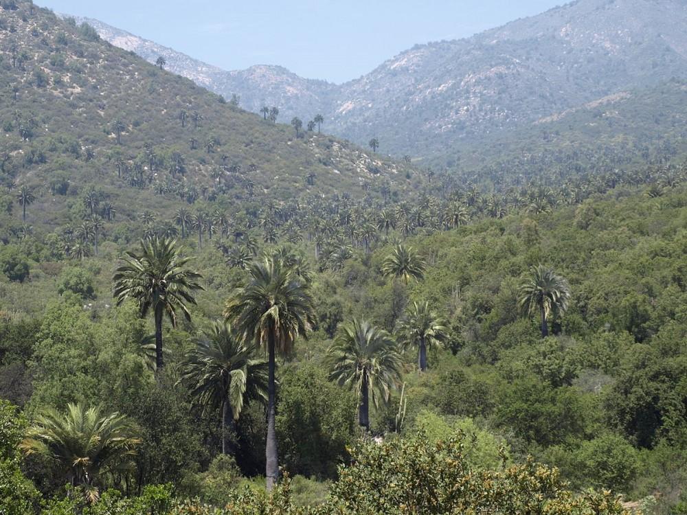 Cerro Campana (Parque Nacional De Cerro Campana)