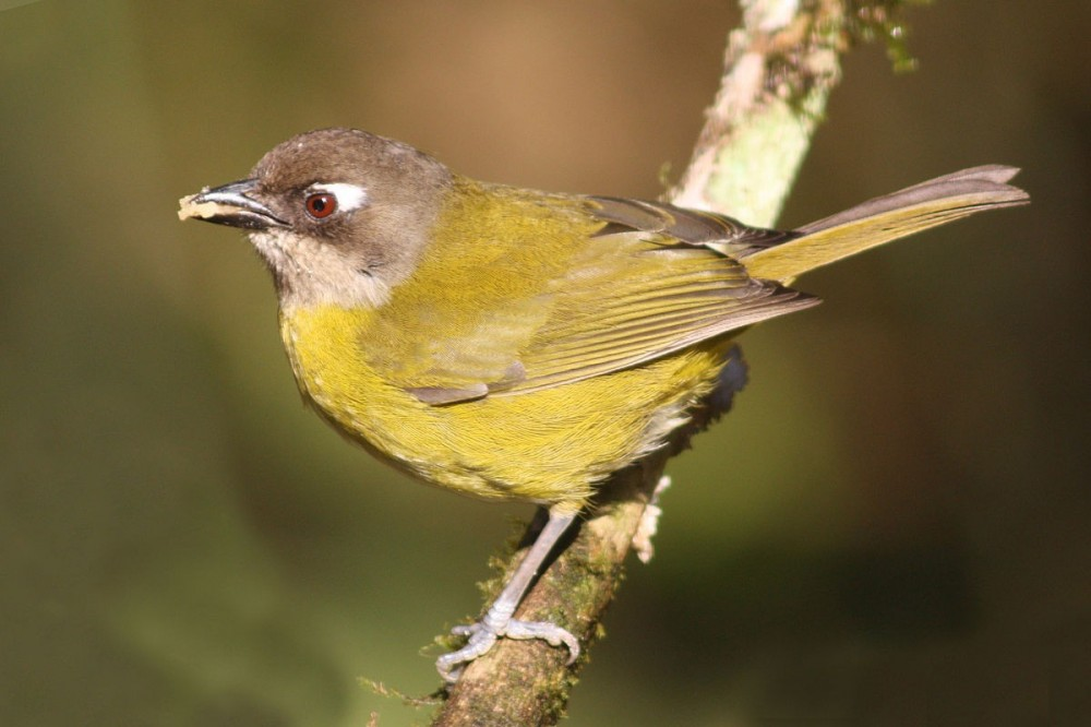 El Valle Birdwatching
