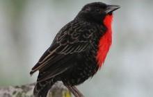 Pipeline Road Birdwatching