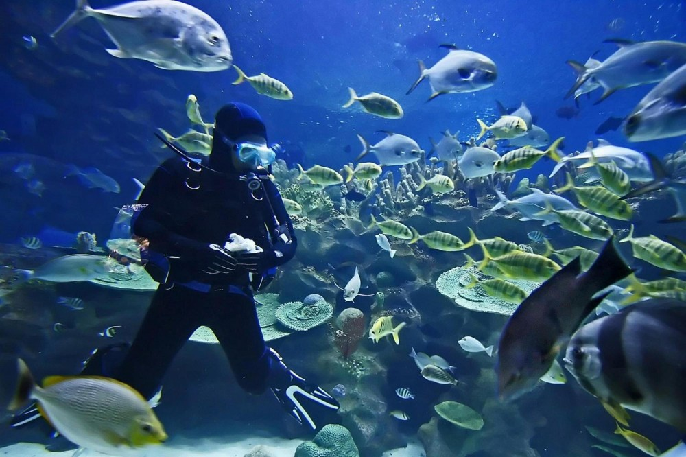 Dive 2 Oceans in One Day